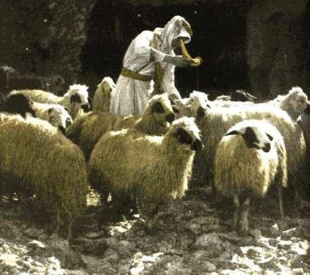 shepherd-annointing-with-oil.jpg